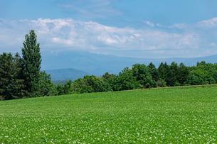 北海道 美瑛町の夏の風景の写真素材 [FYI04586831]