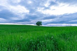 北海道 美瑛町の夏の風景の写真素材 [FYI04586840]