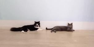 2匹の猫の写真素材 [FYI04586842]