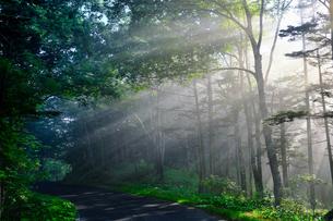 朝霧の森の写真素材 [FYI04586863]