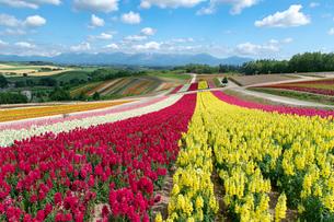 北海道 美瑛町の夏の風景の写真素材 [FYI04586875]