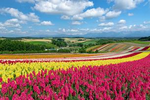 北海道 美瑛町の夏の風景の写真素材 [FYI04586876]