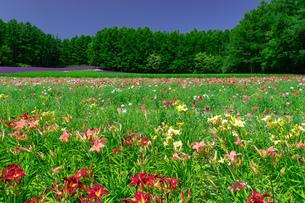 北海道 富良野の夏の風景の写真素材 [FYI04586897]