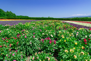 北海道 富良野の夏の風景の写真素材 [FYI04586904]