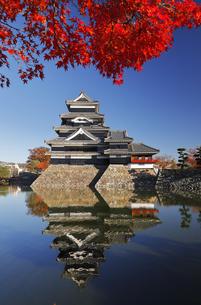 11月 国宝松本城の写真素材 [FYI04586913]