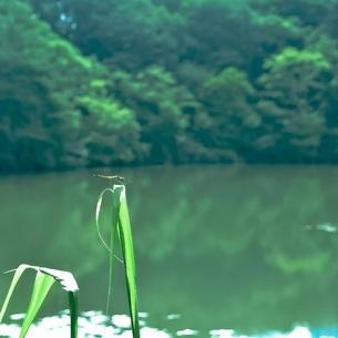 葉の上に留まるトンボの写真素材 [FYI04587280]