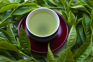 日本茶と茶葉の写真素材 [FYI04587643]
