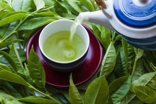 日本茶と茶葉の写真素材 [FYI04587644]