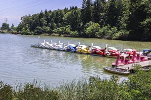 池の桟橋にボートが並ぶ風景の写真素材 [FYI04587963]