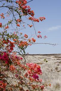 道沿いの紅花の写真素材 [FYI04588030]