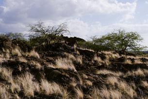 岩と枯れた草の写真素材 [FYI04588046]