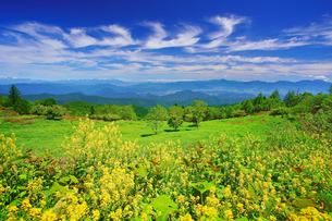 ハルザキヤマガラシと草原と木立と浅間山などの山並みの写真素材 [FYI04588211]