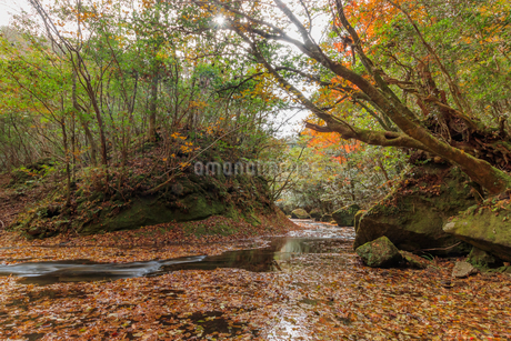秋の岳切渓谷 大分県宇佐市の写真素材 [FYI04588493]