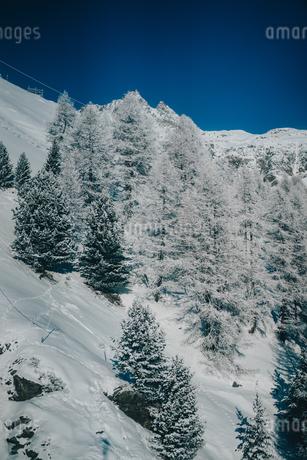 雪の木の写真素材 [FYI04588617]