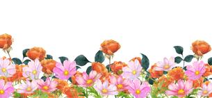 コスモスと薔薇の花畑水彩画のイラスト素材 [FYI04588626]
