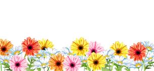 ガーベラとマーガレット花畑水彩画のイラスト素材 [FYI04588627]
