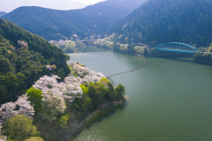 桜咲く市房ダムの写真素材 [FYI04588780]