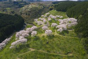 桜咲く人吉梅園の写真素材 [FYI04588787]