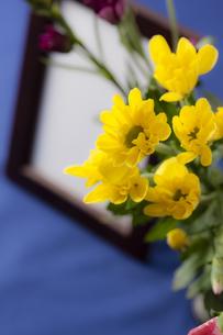 菊の花と遺影の写真素材 [FYI04589113]