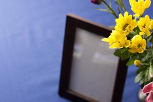 菊の花と遺影の写真素材 [FYI04589114]