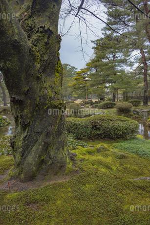 石川県金沢市 雨上がりの兼六園の写真素材 [FYI04589415]