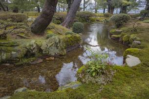 石川県金沢市 雨上がりの兼六園の写真素材 [FYI04589416]