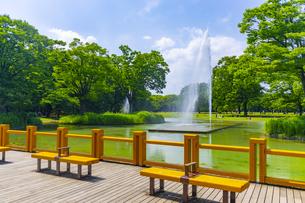 初夏の代々木公園の写真素材 [FYI04589623]