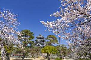 桜咲く松本城の写真素材 [FYI04589753]