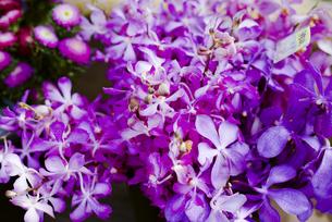 ファーマーズマーケットの花の写真素材 [FYI04589784]