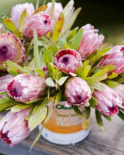 ファーマーズマーケットの花の写真素材 [FYI04589788]