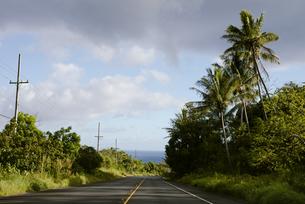 南国の空と道とヤシの木の写真素材 [FYI04589816]