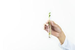 試験管に入る植物を観察する手元のアップ。バイオテクノロジーのイメージの写真素材 [FYI04590107]