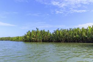 ニッパヤシのジャングル ベトナム ホイアンの写真素材 [FYI04590408]