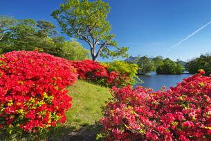 駒ケ岳と大沼のツツジの写真素材 [FYI04590545]