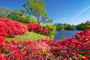駒ケ岳と大沼のツツジの写真素材 [FYI04590547]