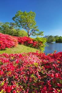 駒ケ岳と大沼のツツジの写真素材 [FYI04590549]