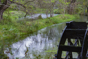 長野県 安曇野 雨あがりの蓼川の写真素材 [FYI04590593]
