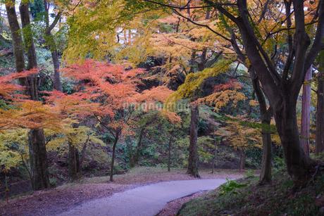 秋の水沢もみじ谷の紅葉に包まれる道の階段の写真素材 [FYI04590772]