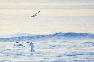 波とカモメの写真素材 [FYI04590773]