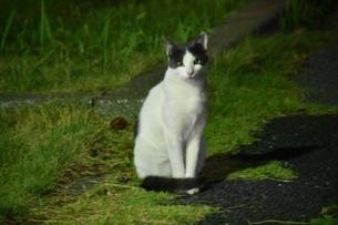 見つめる猫の写真素材 [FYI04590778]