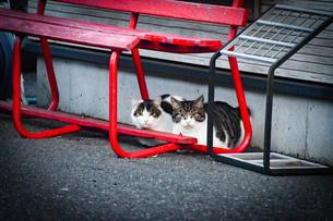見つめてくる二匹の猫の写真素材 [FYI04590779]