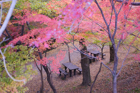秋の水沢もみじ谷の赤い紅葉に包まれる休憩所のピクニックテーブルの写真素材 [FYI04590824]