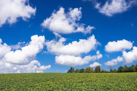 濃厚の空に広がる雲の写真素材 [FYI04591116]