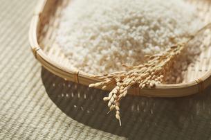 畳の上のザルに入った米と稲穂の写真素材 [FYI04591127]