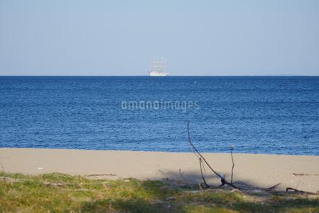 青い海の水平線上に浮かぶ帆船と流木の枝の写真素材 [FYI04591279]