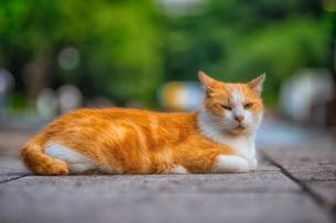 野良猫 Homeless Cat の写真素材 [FYI04591592]