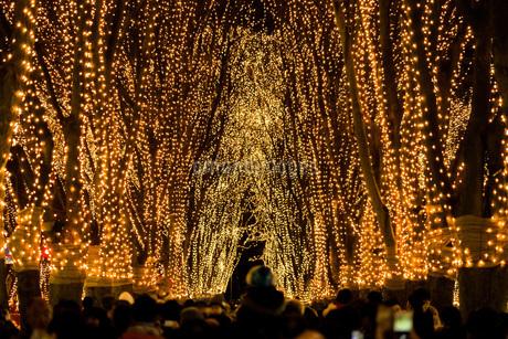仙台定禅寺通りの光のページェントと夜景の写真素材 [FYI04591631]