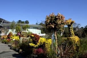 とっとり花回廊,青空の西館入口付近の写真素材 [FYI04591692]