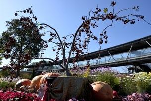 とっとり花回廊,西館入口付近の写真素材 [FYI04591694]