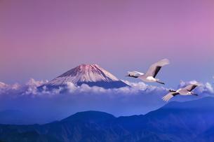 富士山と丹頂鶴CGの写真素材 [FYI04592048]
